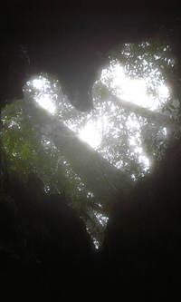 Image16200